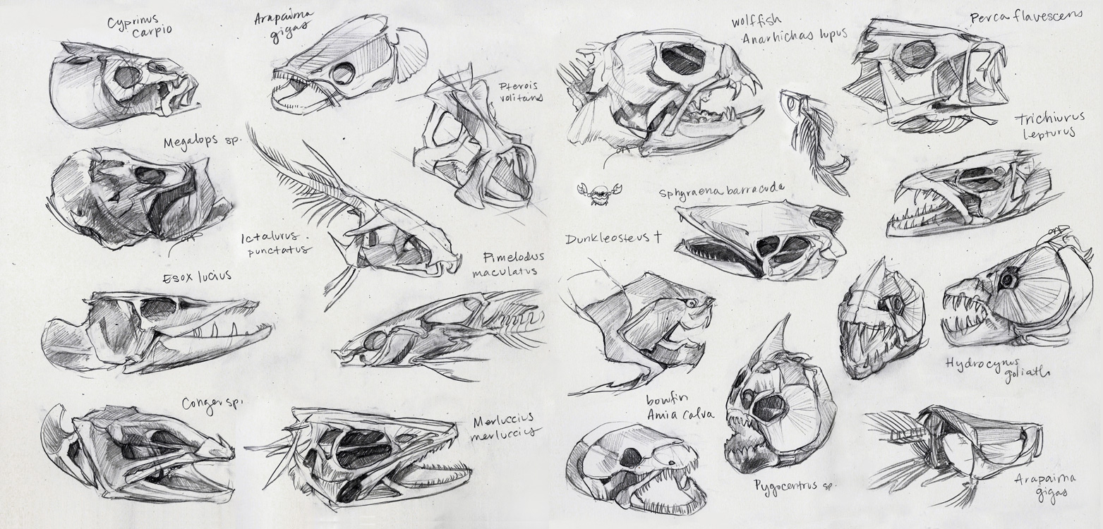 Funky Fish Skull Anatomy Frieze - Anatomy and Physiology Tissue ...